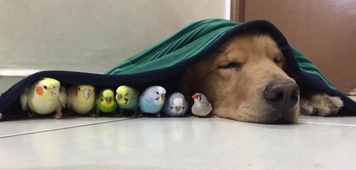 フリー写真(犬と小鳥)