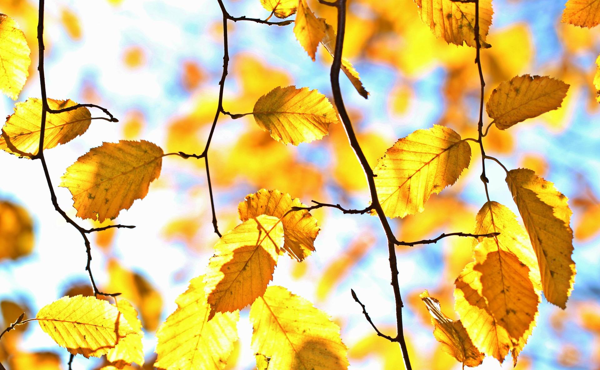 autumn-1042346_1920.jpg