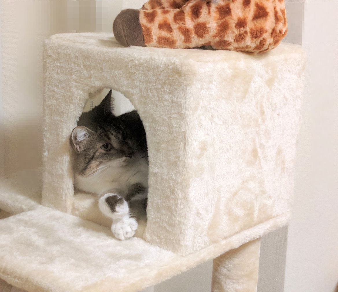nora_on_cat_tower