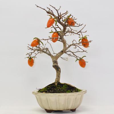 0000 老爺柿