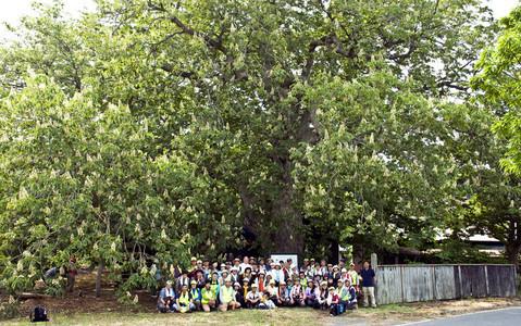 yyy 東北地方の神秘の巨木たち 青森県天然記念物・青森県最大級、推定樹齢850年のトチ