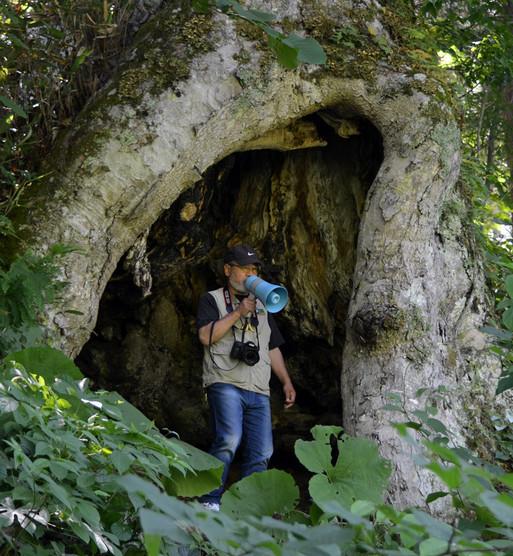 yyy 東北地方の神秘の巨木たち 新郷村「栃窪のトチ」