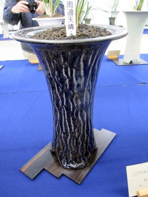 yyys 水晶寒蘭の欅鉢15 「サングリーンきむら」が扱っている鹿児島の「花遊」の鉢