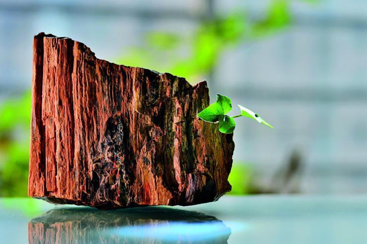 yyyk 硅化木5 China1