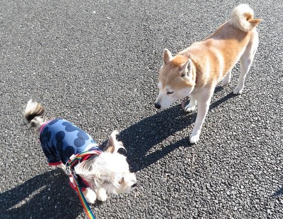 5A07 あやちゃん 福島の被災犬 1207