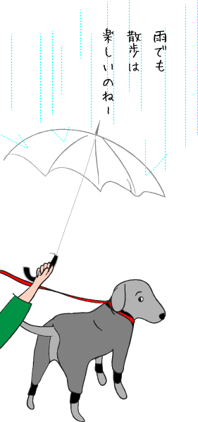 ラブラドールの雨の日散歩