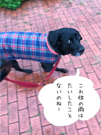 雨の日散歩01
