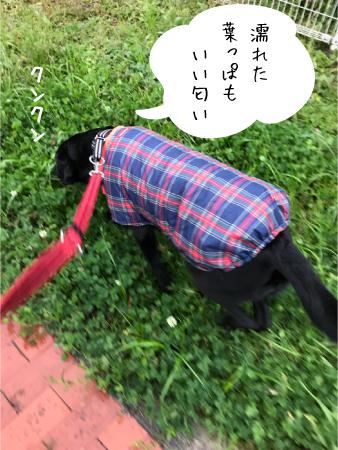 雨の日散歩03