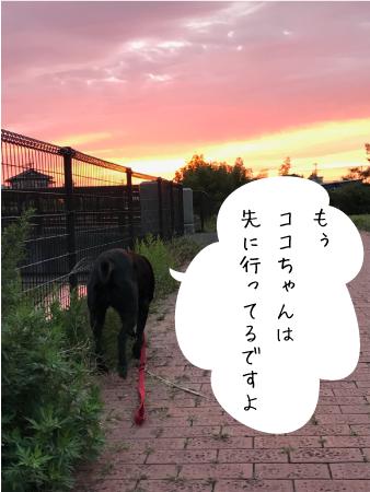 朝焼け01