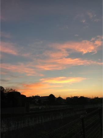 朝散歩とラブラドール01