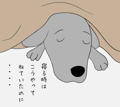 眠るラブラドール