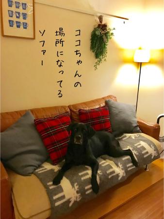 ソファーに座るラブラドール