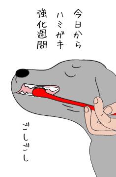 歯ブラシとラブラドール