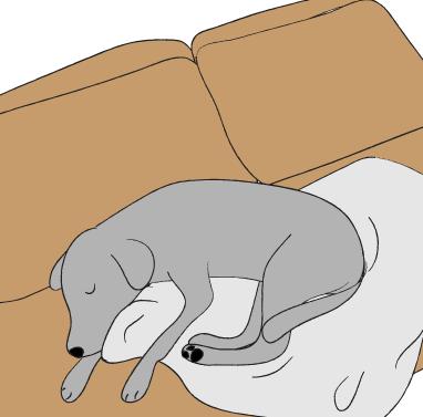 ソファーで眠るラブラドール
