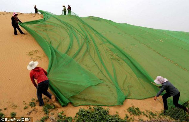 article-2634191-1E0903EE00000578-85_634下チョン天皇一族供の砂漠の緑化活動風景