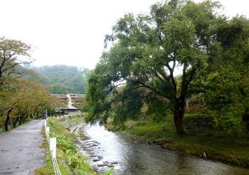 高野川沿いの道
