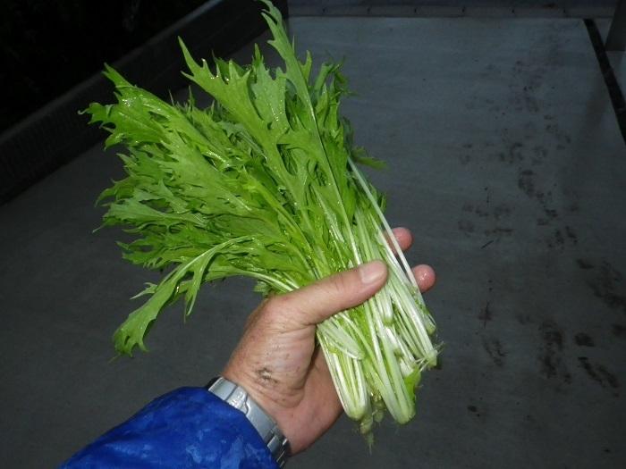 収穫2_17_10_20