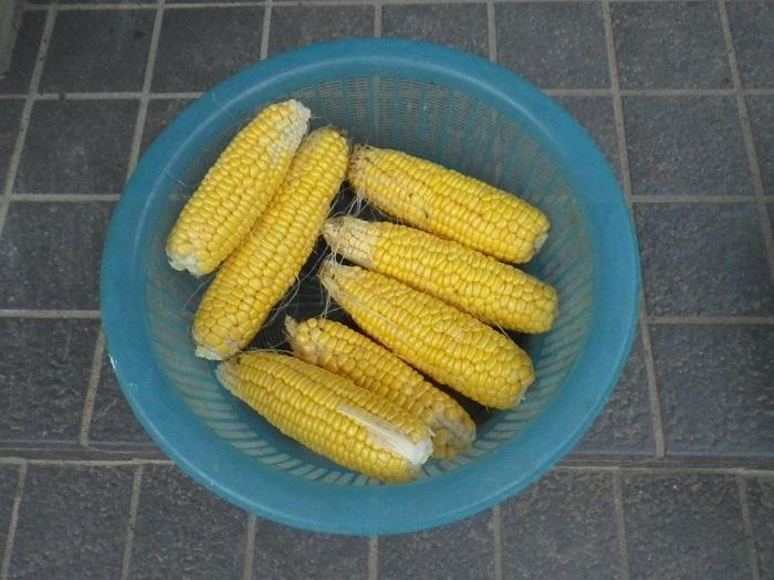 収穫17_10_24
