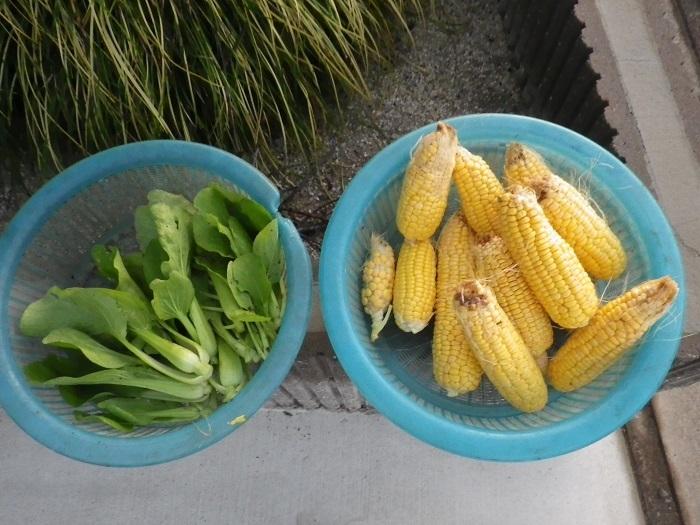 収穫17_10_26