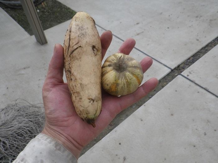 収穫18_010_07