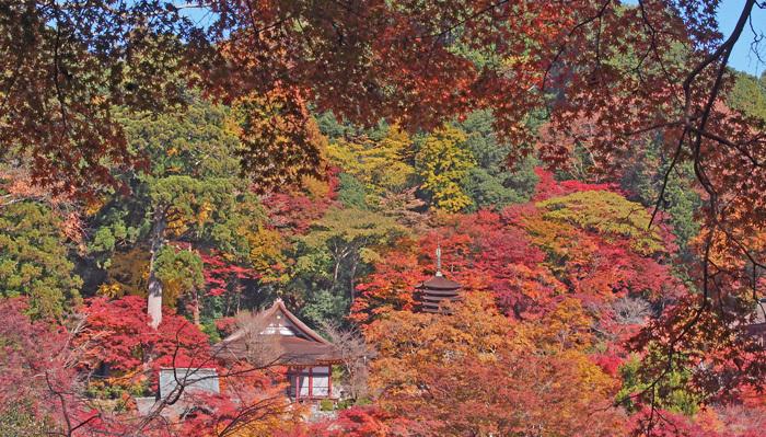 29a談山神社2014.11.22