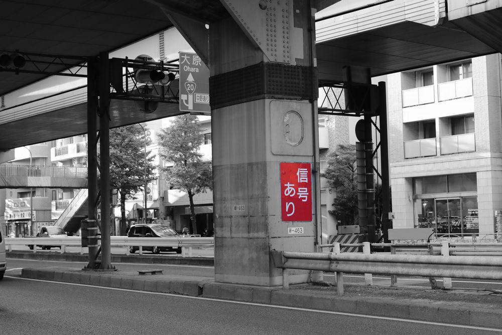 IMG_2989-1000.jpg