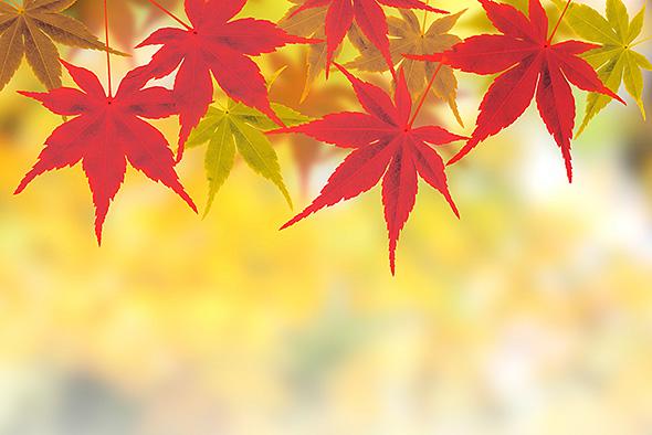 os_fall01.jpg