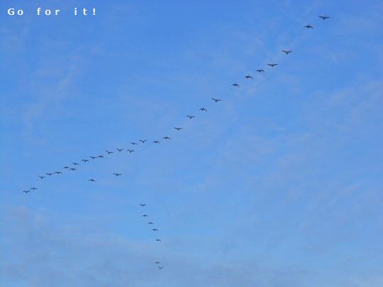 渡り鳥 171016