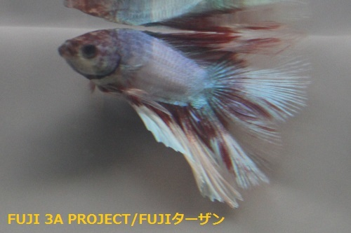フルムーン (2)