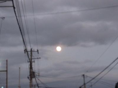 夕方散歩の月