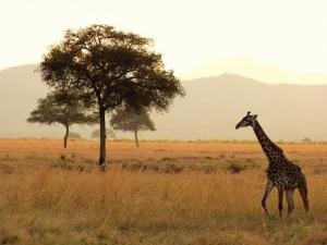 africa-1979220__340.jpg