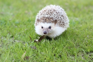 hedgehog-663638_960_720.jpg