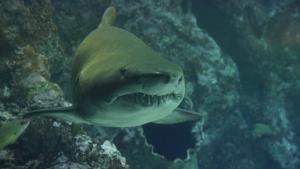 shark-426566__340.jpg