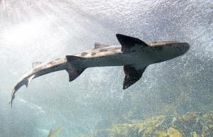 shark-553666__340.jpg