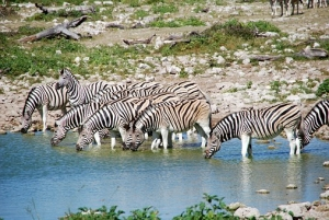 zebras-55248__340.jpg