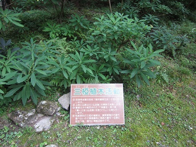 百済寺 (13)-2