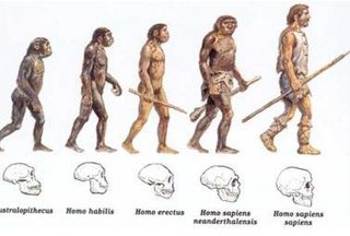 sapiens-20171222.jpg