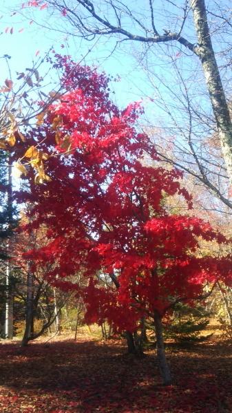 DSC_0016八ヶ岳自然文化園 (1)s