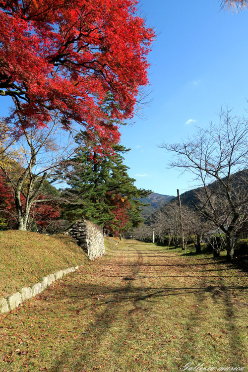 紅葉の神社。8