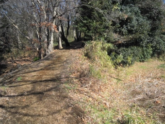 木も休まるような林の中171014