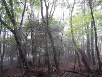 気持ちの良い林が続く171014