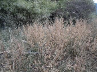 広大な湿地渡良瀬遊水地ー1-171111