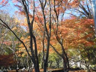 西丹沢自然教室171116