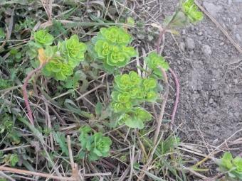 足柄峠から富士山171203