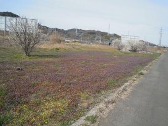 丈の長い笹の道を進む171208