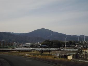 真弓の木171208