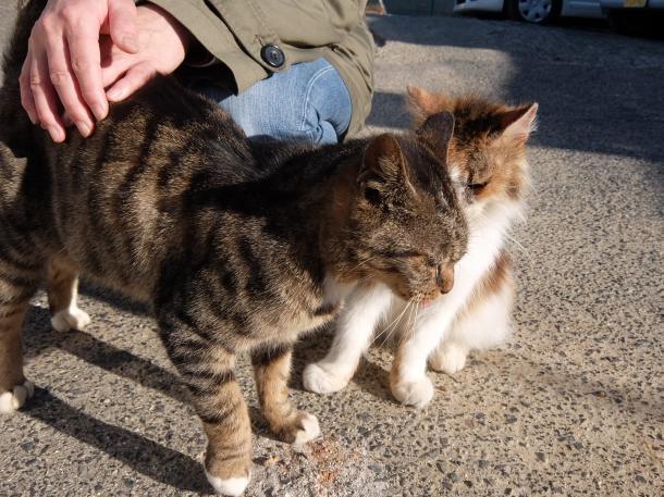 猫20,25
