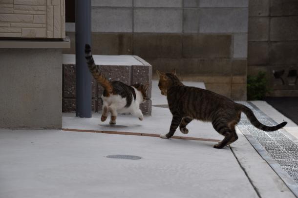 猫19,21