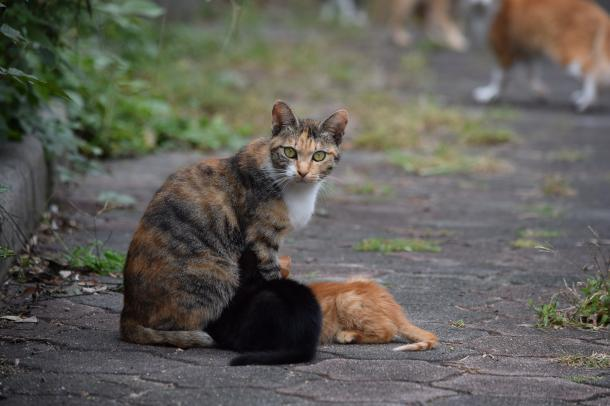 猫15,16,17