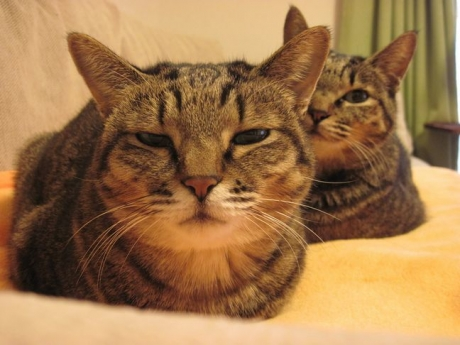 毛布と姉妹